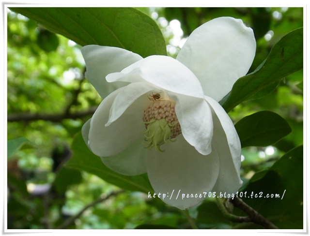 吉和冠山の花011