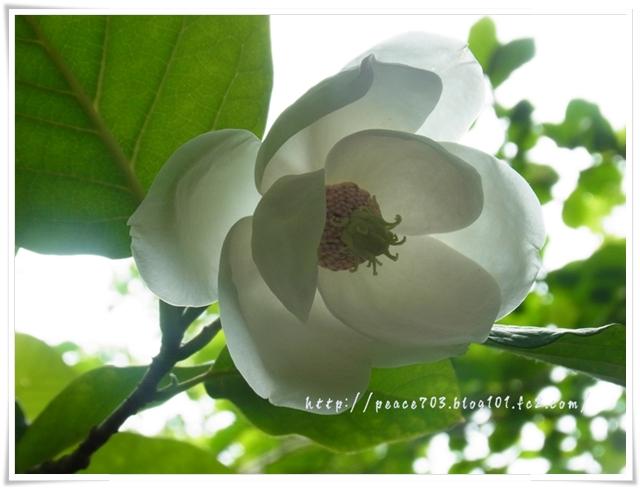 吉和冠山の花013