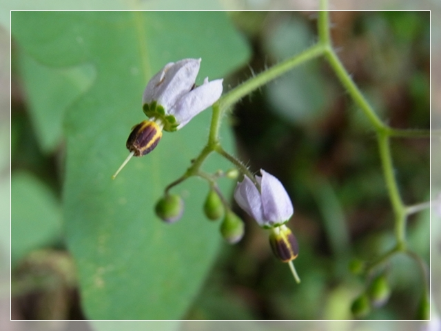 笠戸島の花03