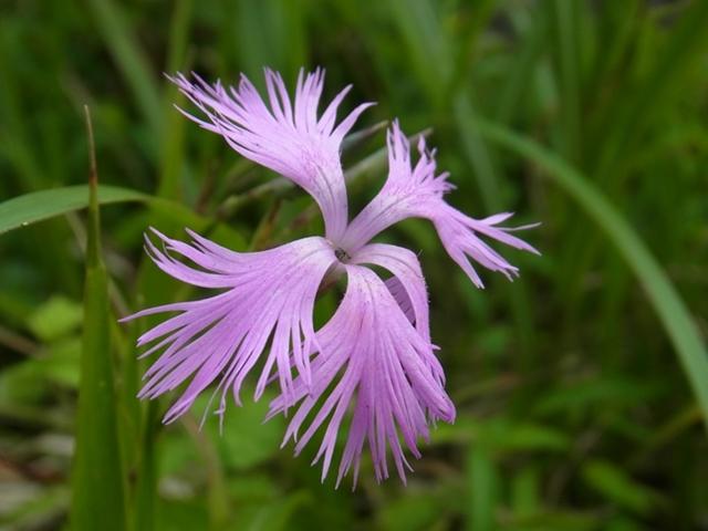青野山の花007