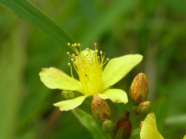 青野山の花011
