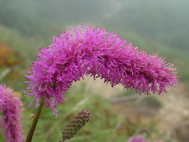 白山の花014