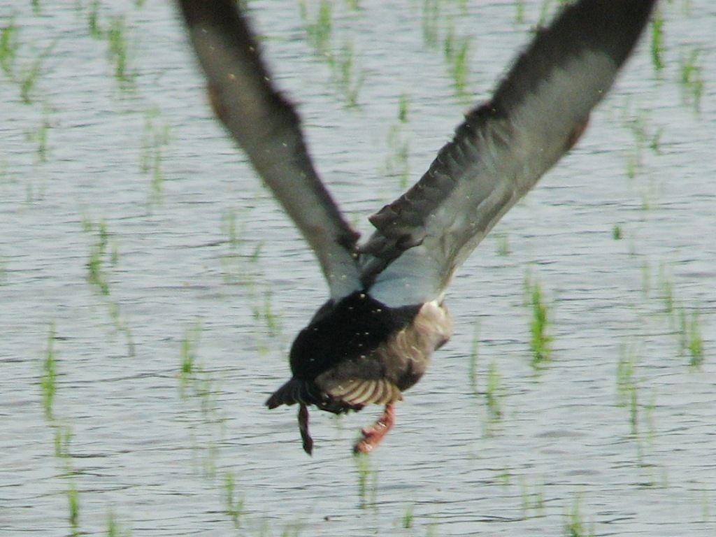 bird126.jpg