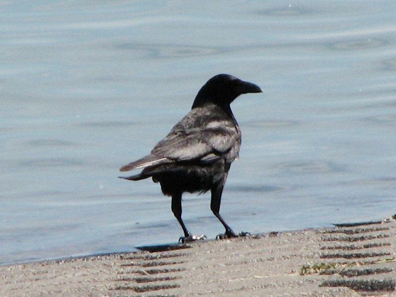 bird127.jpg