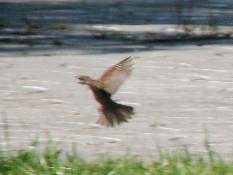 bird128.jpg