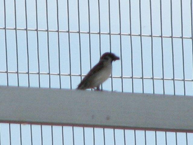 bird129.jpg