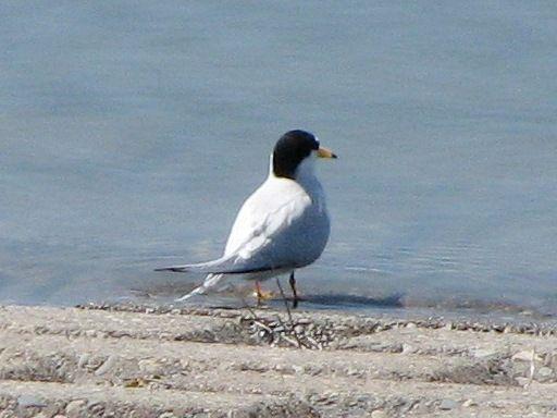 bird131.jpg