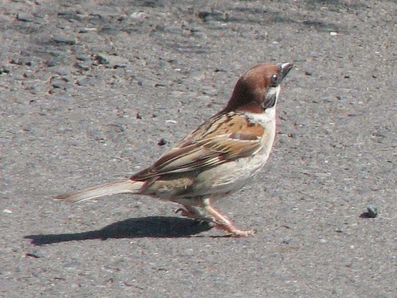 bird135.jpg