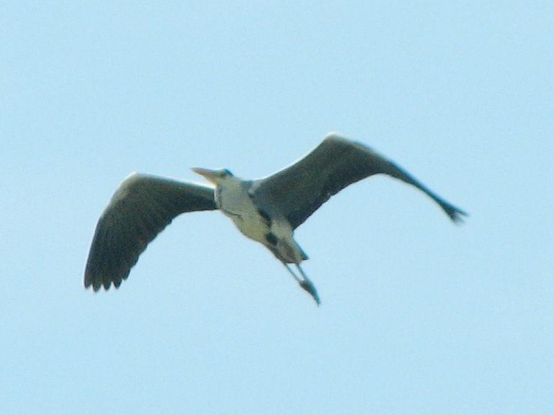 bird137.jpg