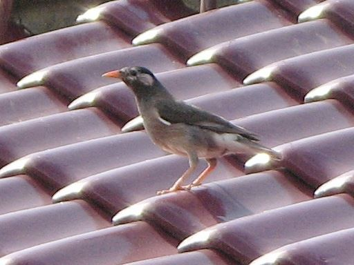 bird138.jpg