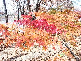 紅葉20131105