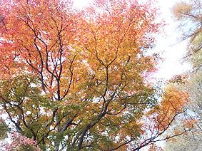 紅葉グラデ20131105