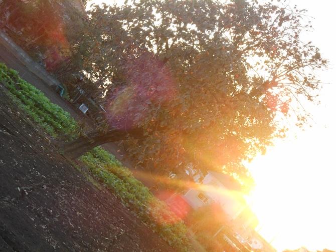 3 秋の夕日