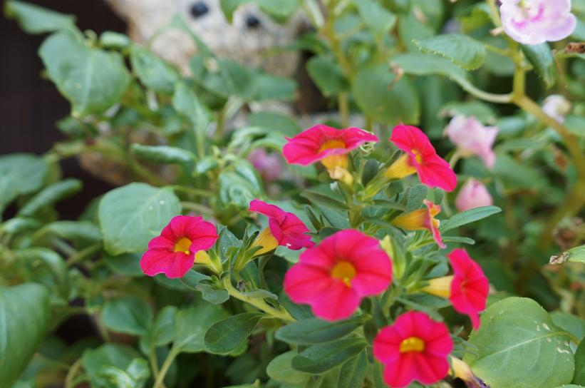 plant-DSC08339s.jpg