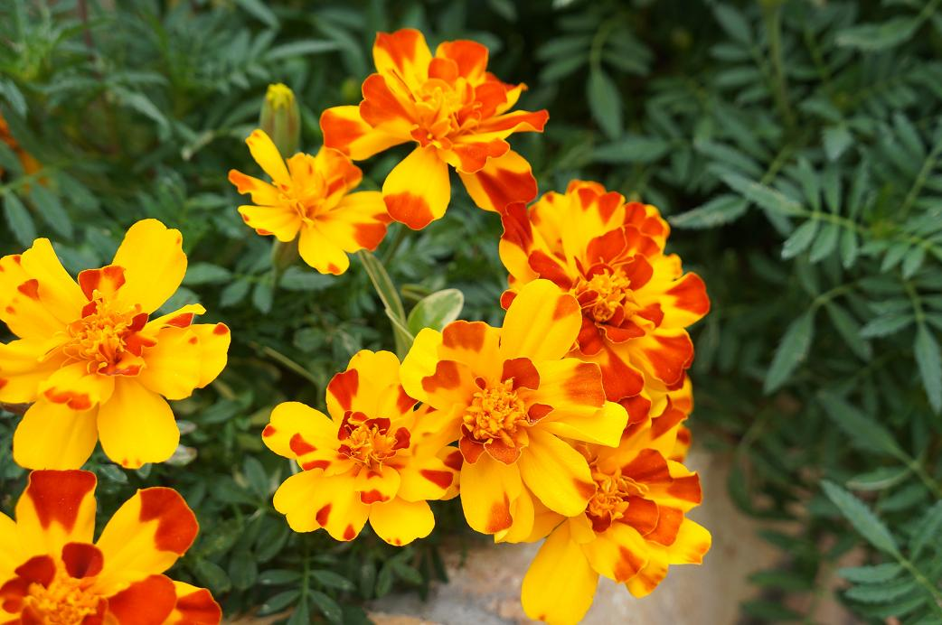 plant-DSC08535s.jpg