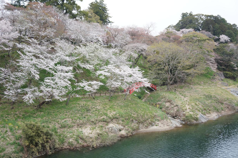 sakurabuchi-DSC06950s.jpg