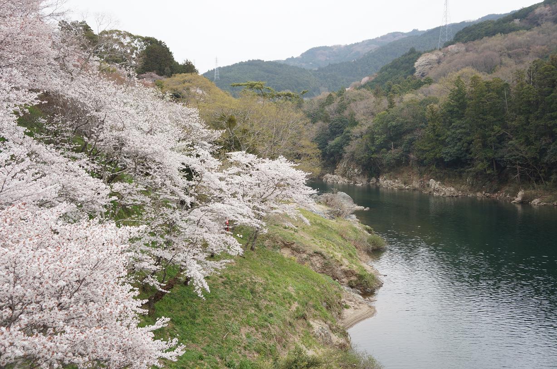 sakurabuchi-DSC06951s.jpg