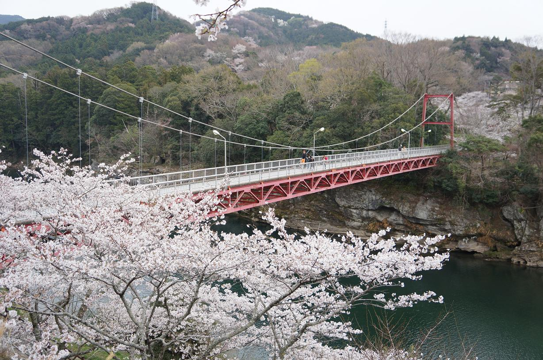 sakurabuchi-DSC06955s.jpg