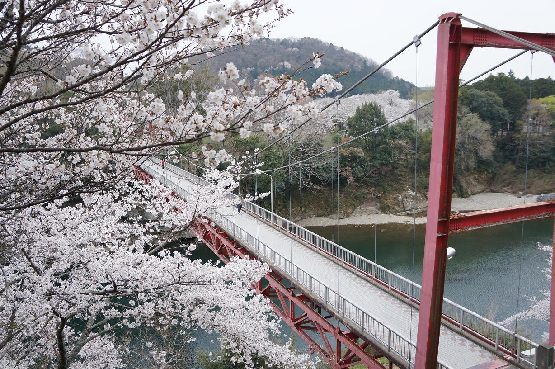 sakurabuchi-DSC06975s.jpg