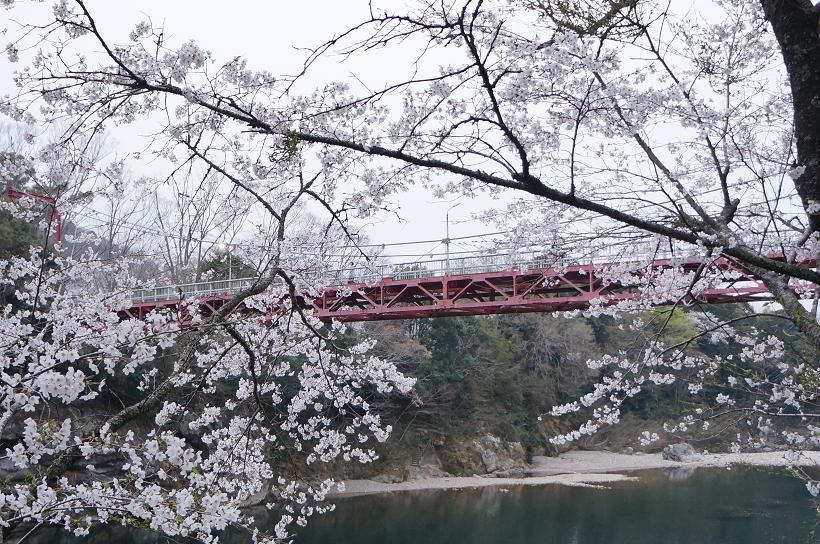 sakurabuchi-DSC06979s.jpg