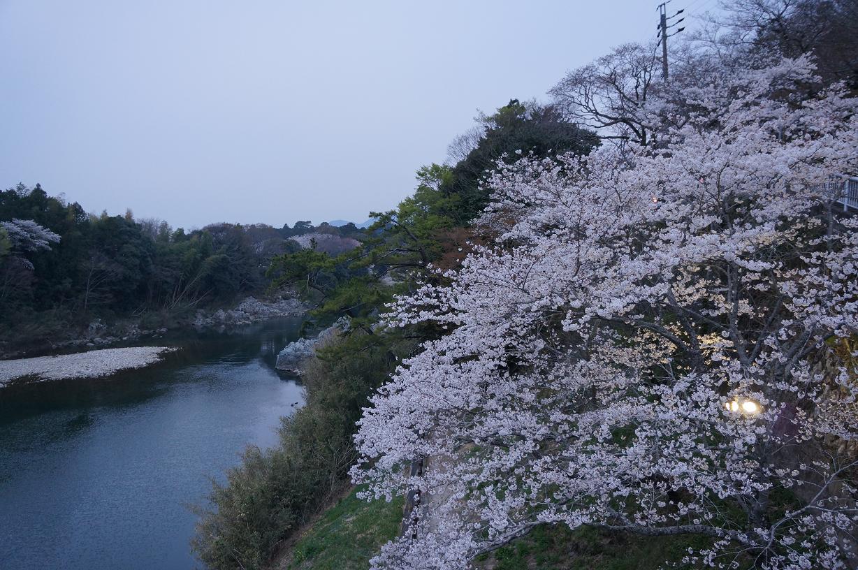 sakurabuchi-DSC06983s.jpg