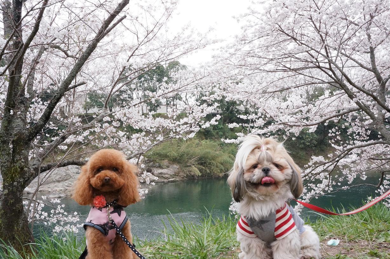 sakurabuchi-Link-Merry-DSC06964s.jpg