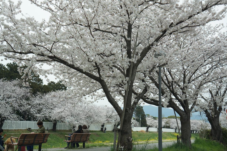 sakurabuchi-sanada-DSC06940s.jpg