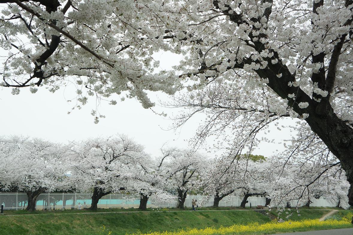 sakurabuchi-sanada-DSC06942s.jpg
