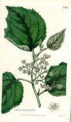 s-CBM-1813-1816.jpg