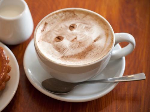 chiba-cafe.jpg