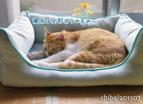 chiba13-07-52.jpg
