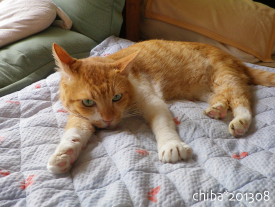 chiba13-08-05.jpg