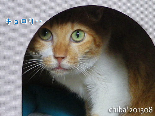 chiba13-08-141.jpg