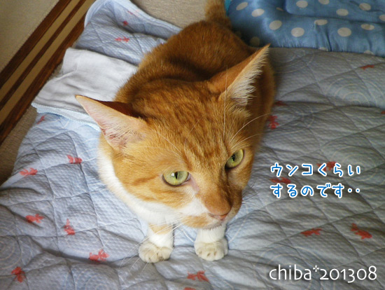 chiba13-08-153.jpg