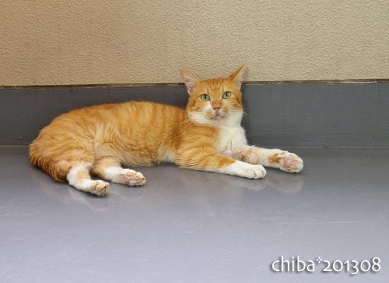 chiba13-08-154.jpg