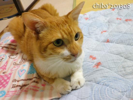 chiba13-08-174.jpg