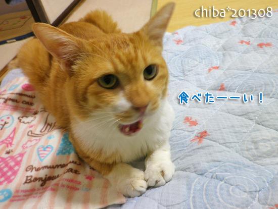 chiba13-08-175.jpg