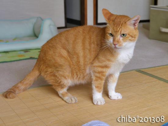 chiba13-08-23.jpg