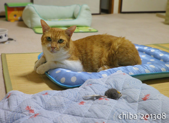 chiba13-08-36.jpg