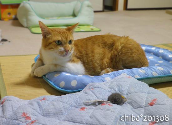 chiba13-08-37.jpg