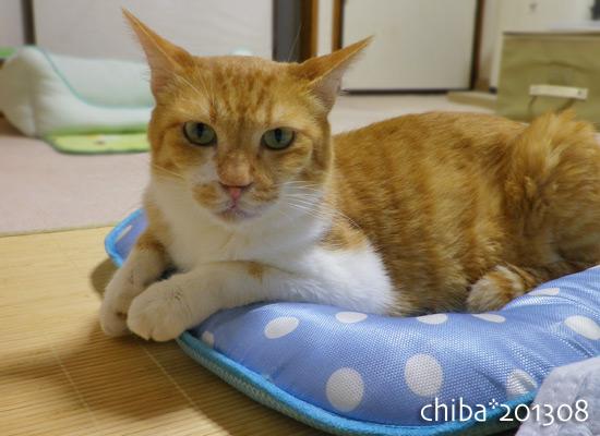 chiba13-08-39.jpg