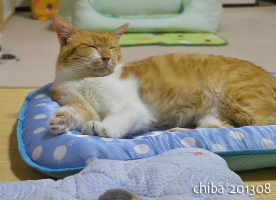 chiba13-08-43.jpg