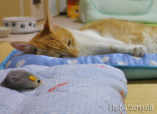 chiba13-08-48.jpg