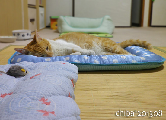 chiba13-08-49.jpg