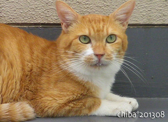 chiba13-08-61.jpg