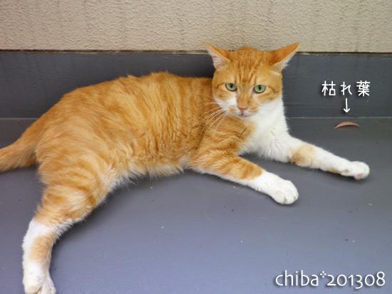 chiba13-08-65.jpg
