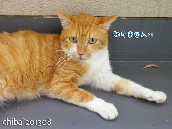 chiba13-08-66.jpg
