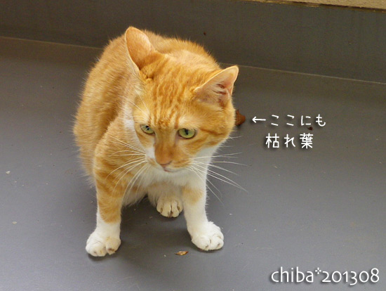 chiba13-08-67.jpg
