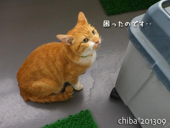 chiba13-09-06.jpg