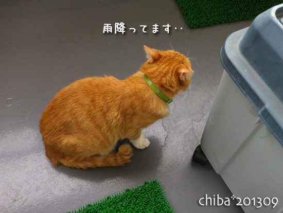 chiba13-09-09.jpg